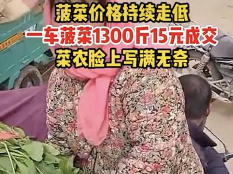 1300斤菠菜15元成交,菜农脸上写满辛酸,引发网友的热议!